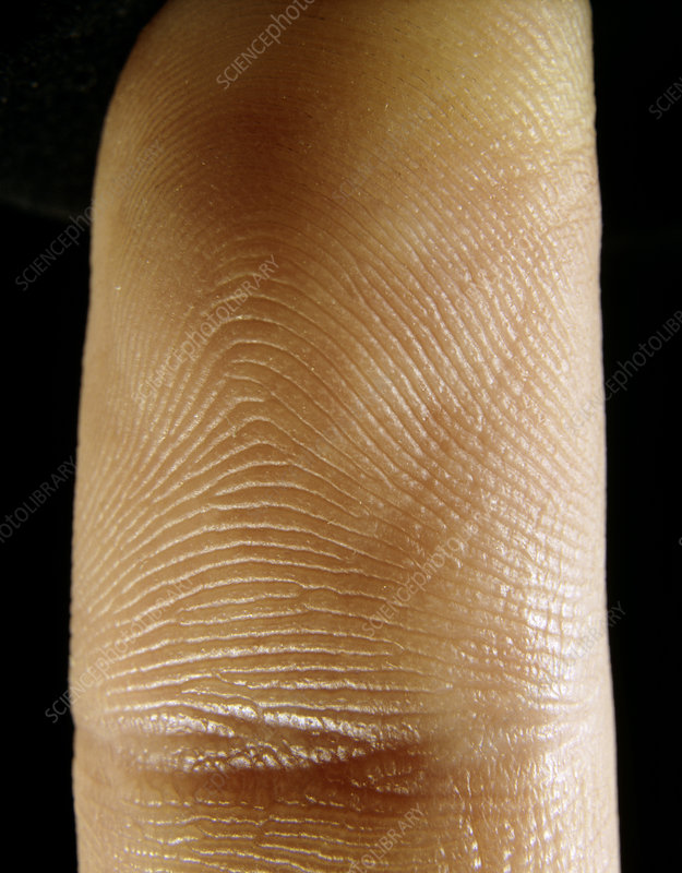 Close-up of the skin of the index finger