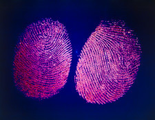 Macrophotograph of a human fingerprint