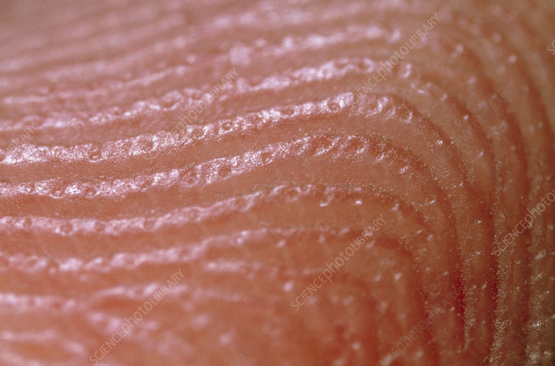 Macrophot of skin surface of finger