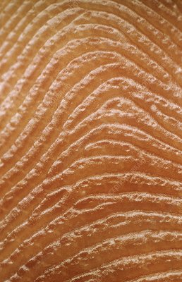 Macrophoto of fingerprint of a man