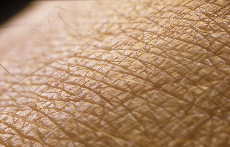 Macrophoto of the skin on the back of the hand