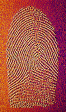 Computer enhanced view of a fingerprint