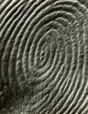 Wax replica of a human fingerprint