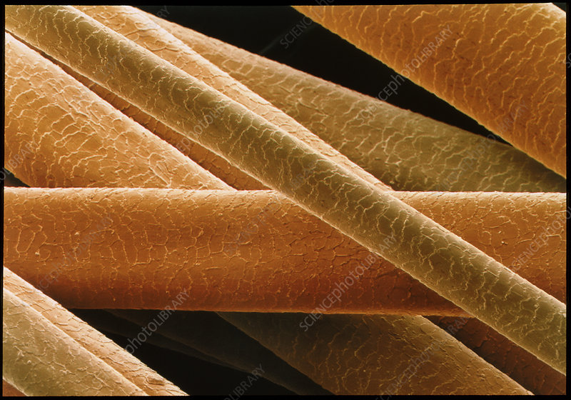 Coloured SEM of shafts of human hair