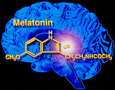 Artwork of melatonin secretion by pineal gland