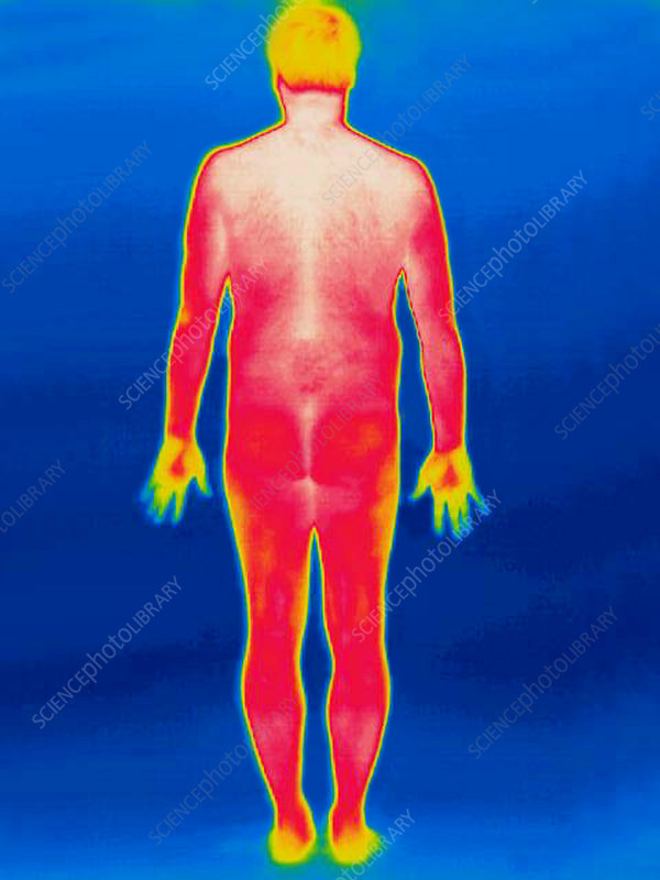A thermogram of a nude man (back)