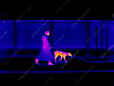 Woman walking a dog, thermogram