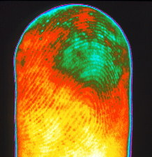 Thermogram of a human finger