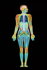 Coloured MRI scan of a whole human body (female)