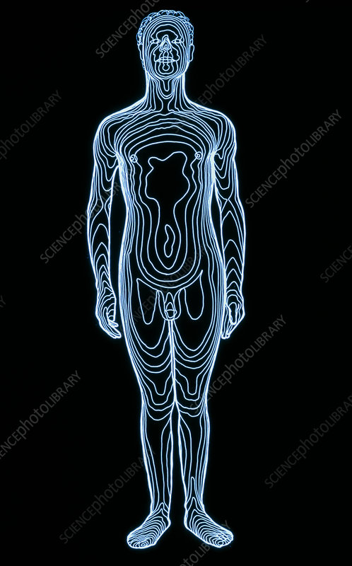 Whole-body contour map of man, front view