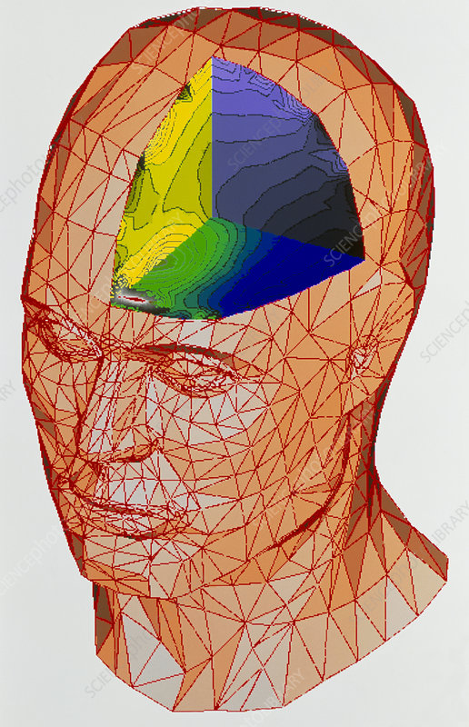 Computer model of human head with magnetic fields