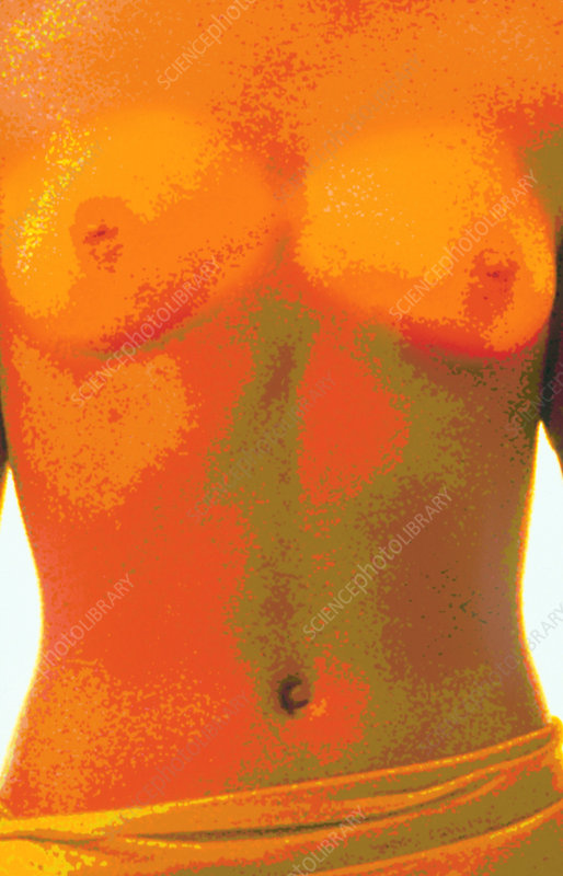 Computer abstract of woman's torso, front view