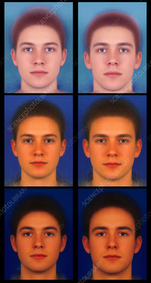 Masculinised and feminised male Caucasian faces