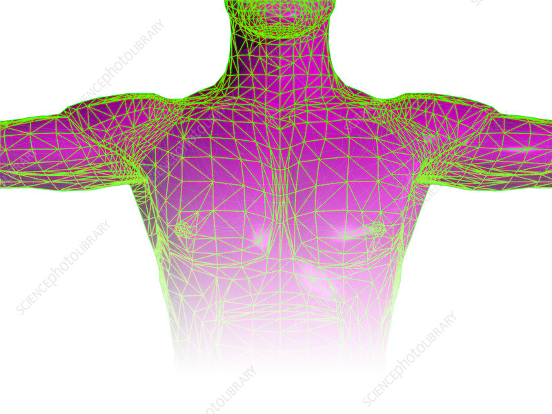Male torso body map