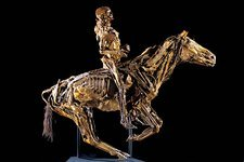 Human and horse anatomy, Fragonard Museum