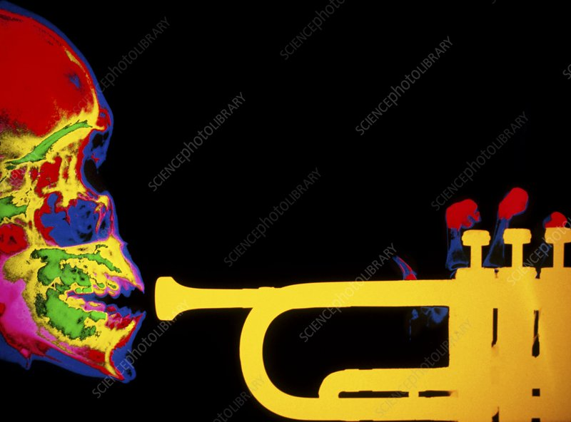 Coloured X-ray of human skull playing the trumpet