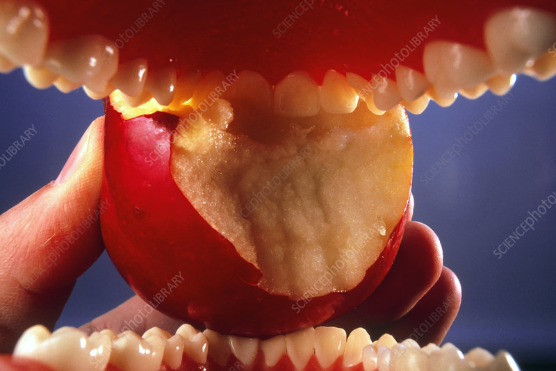Apple being eaten seen from inside the mouth