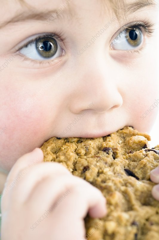 Toddler eating a chocolate chip cookie