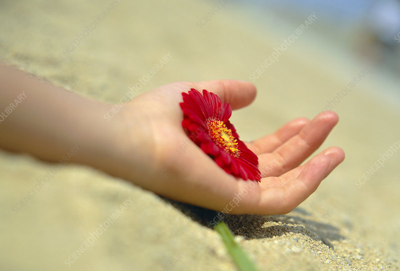 Flower held in a hand