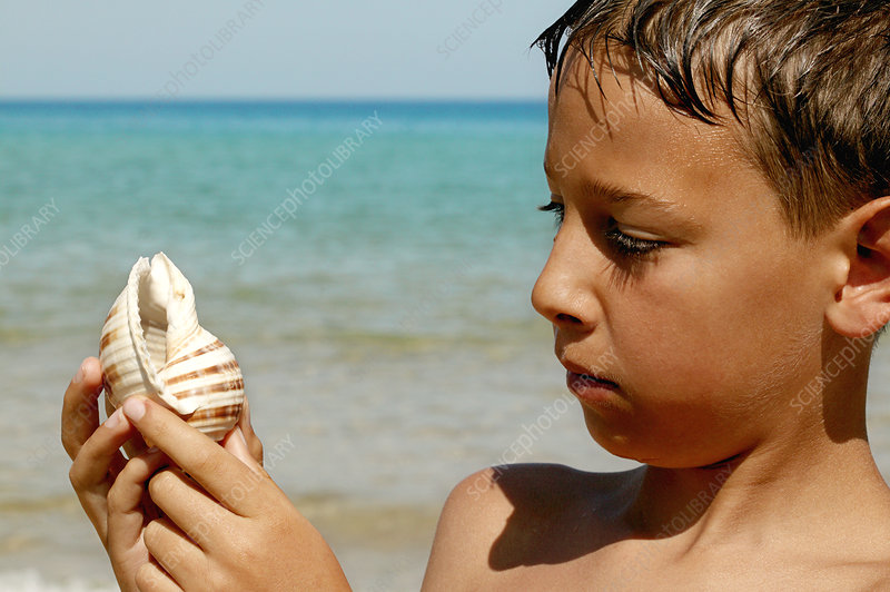 Boy looking at a shell