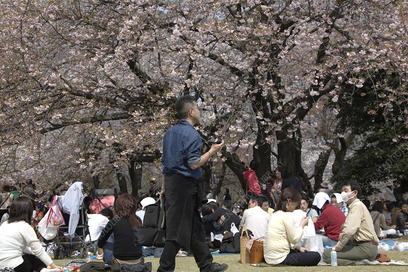Picnicking in Ueno Park, Tokyo