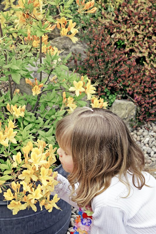 Girl smelling rhododendrons