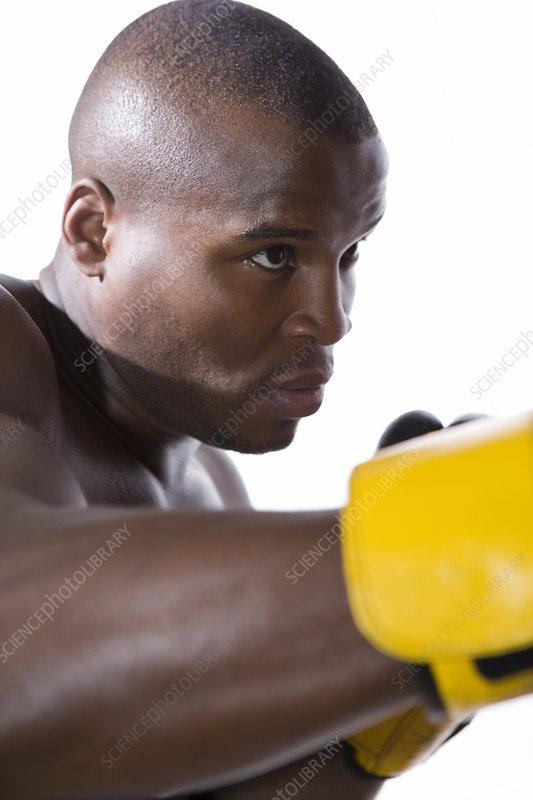 Boxer training