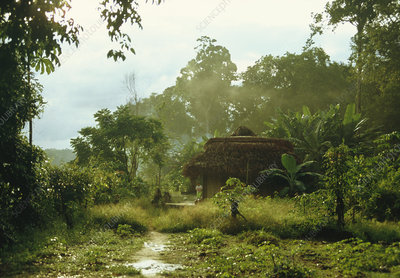 Jungle settlement
