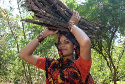 Woman carrying firewood, India