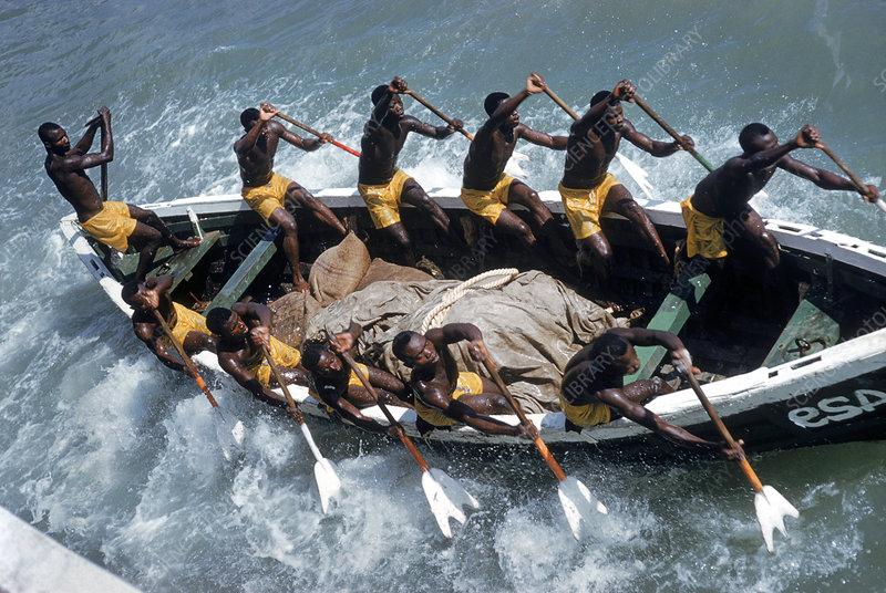 Fanti fishermen rowing a skiff, Ghana