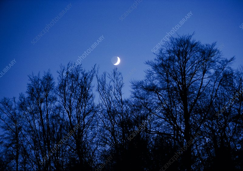 Crescent Moon rising over trees