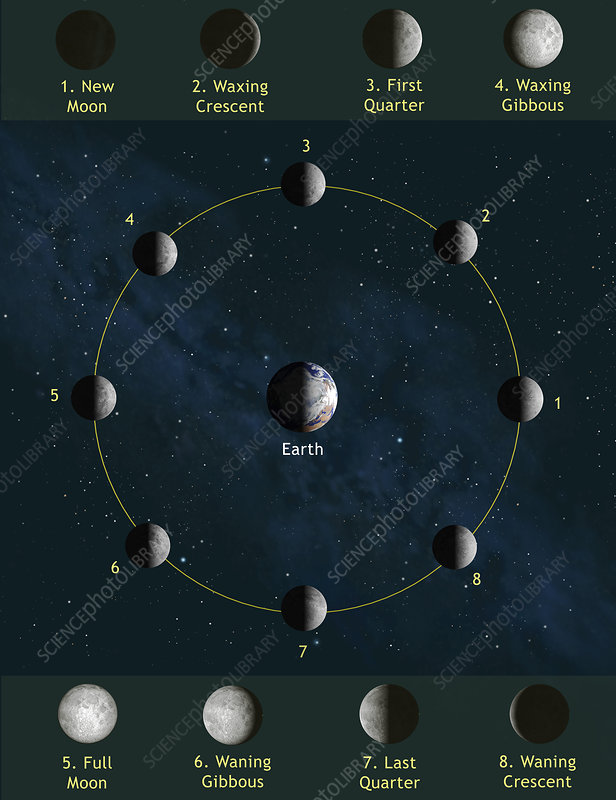 Phases Of The Moon - Stock Image R340  0676