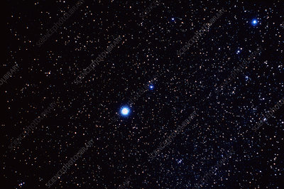 Constellation of Canis Minor
