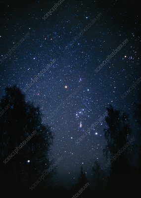Optical image of the constellation Orion and trees