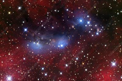 Reflection and emission nebula (NGC 6559)