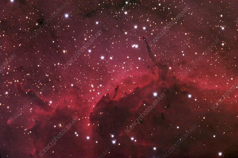 Gas pillars in the Pelican nebula