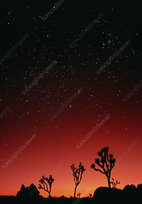Starry sky and sunset taken in Joshua Tree Park