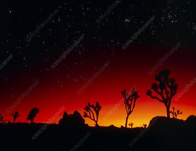 Sunset seen from Joshua Tree Park