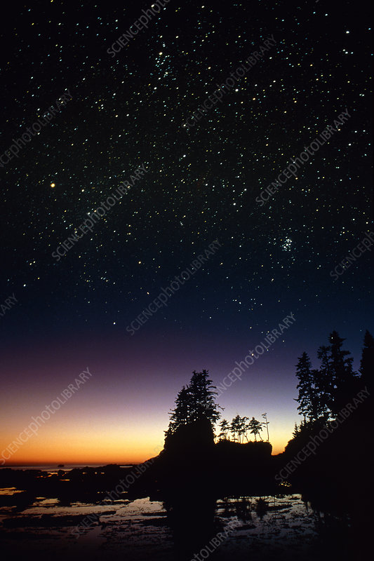 Starfield over a group of coastal trees