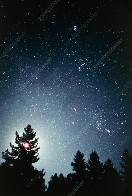 Constellations of Orion and Taurus over a forest