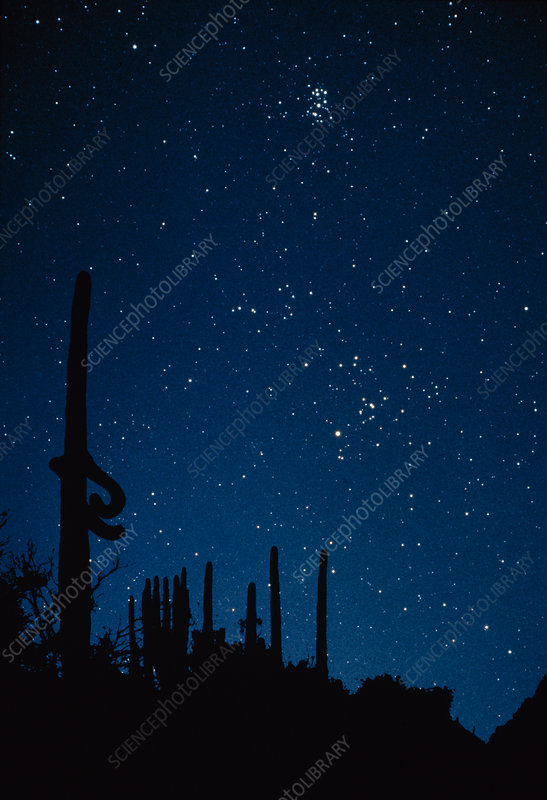 Hyades & Pleiades clusters over cacti silhouettes