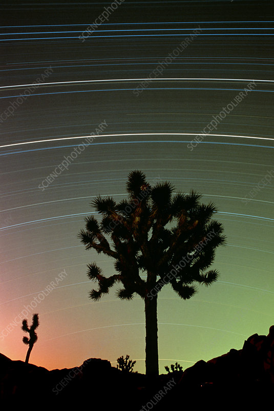 Star trails over Joshua Tree National Monument