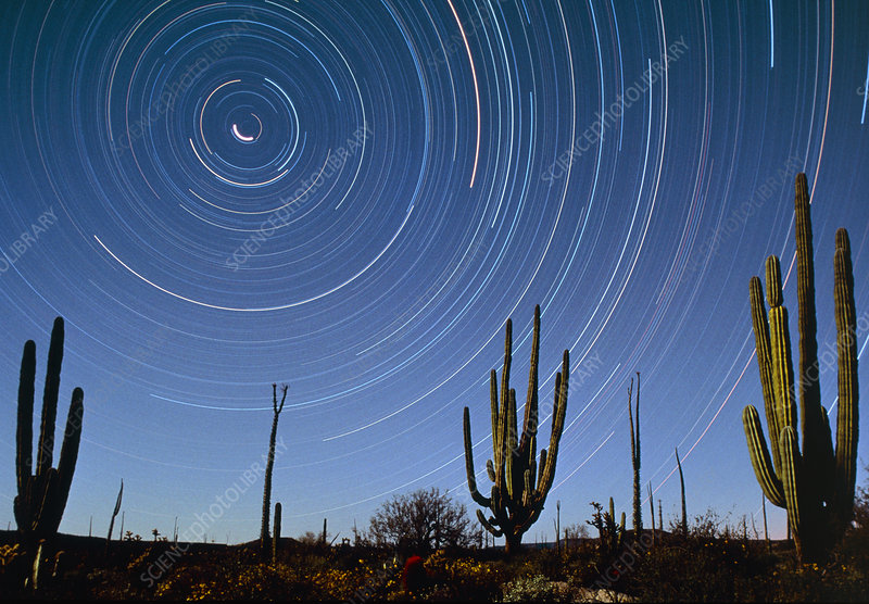 Star trails over cacti