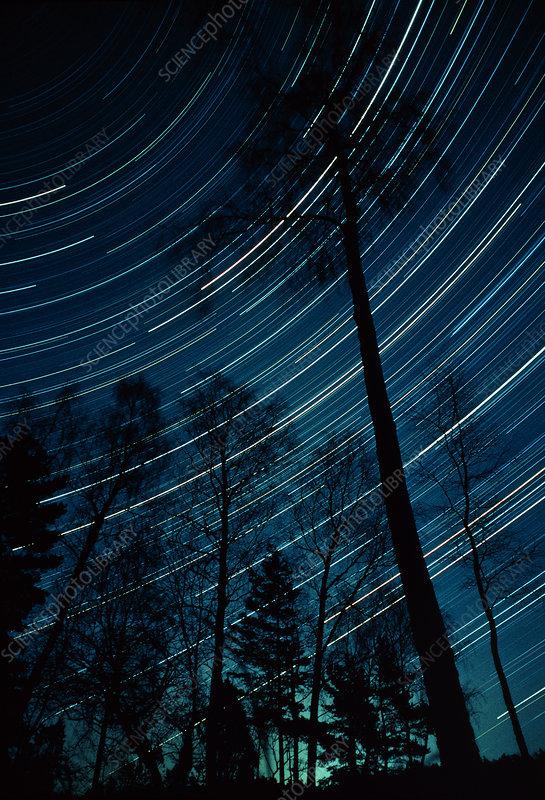 Star trails through trees