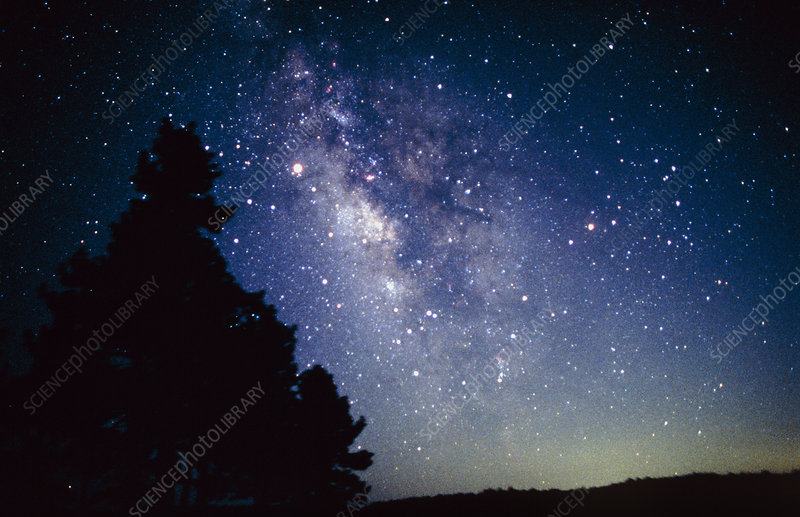 Central Milky Way seen over tree silhouette