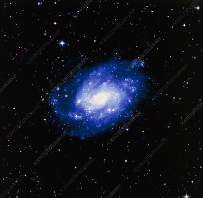 Optical image of the spiral galaxy NGC 300