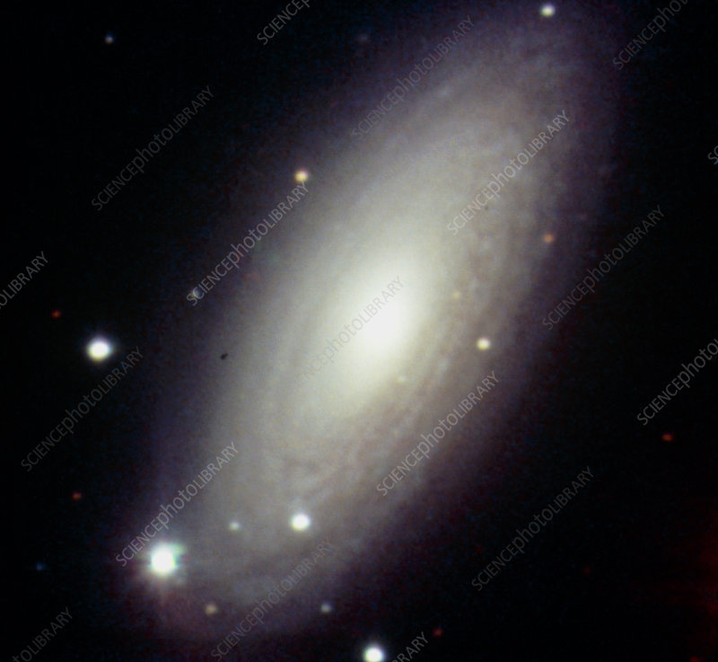 Optical CCD image of the spiral galaxy NGC 2841