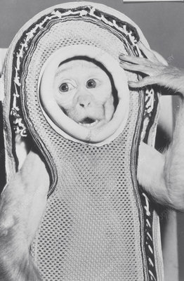 Monkey in a spacesuit