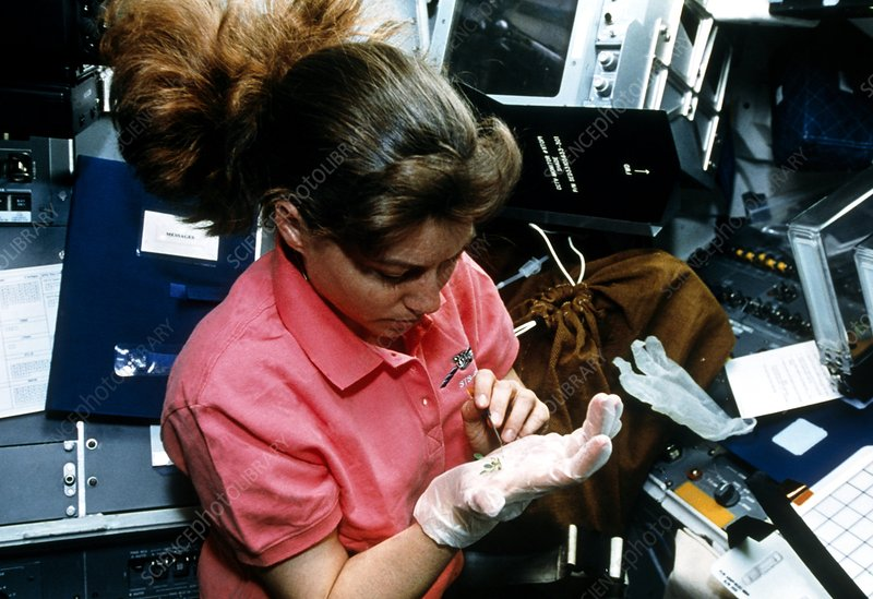 Astronaut Coleman studying plant growth on STS-093