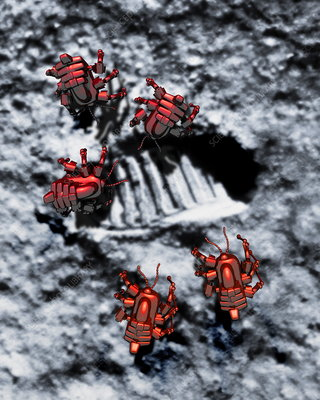 Robots on the Moon